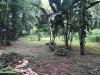la vegetazione tropicale