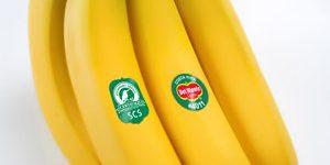 del-monte-banane-marchio-scs-1-cs