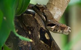 serpente 1