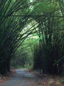 il bosco di bambù